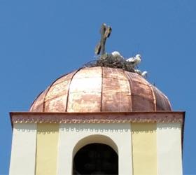 Bulgaria storks