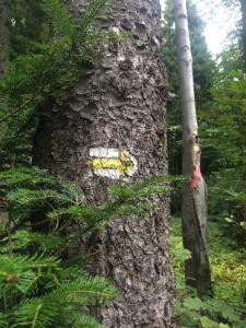 TreeWayMark