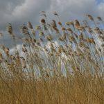 1-grasses-opt