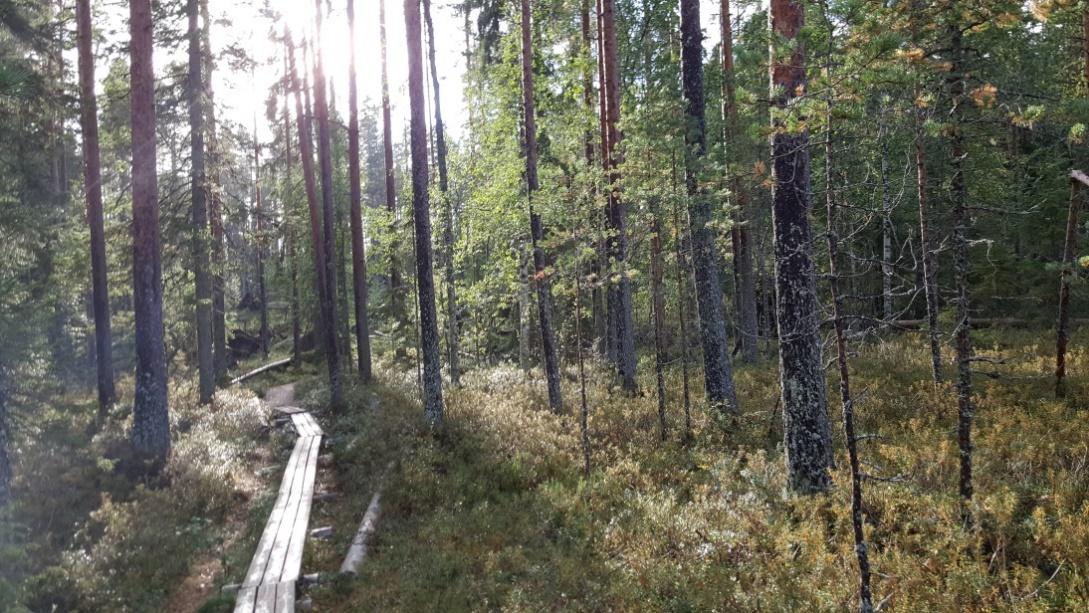 C:\Users\gmar\Desktop\Finland\20190905_170512.jpg