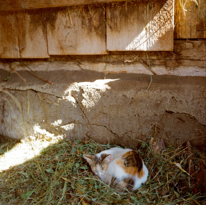 C:\Users\inrc\Documents\Romania\Yashica images\Farm cat.jpg