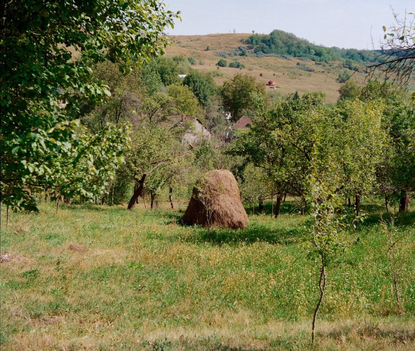 C:\Users\inrc\Documents\Romania\Yashica images\Hay meadow.jpg