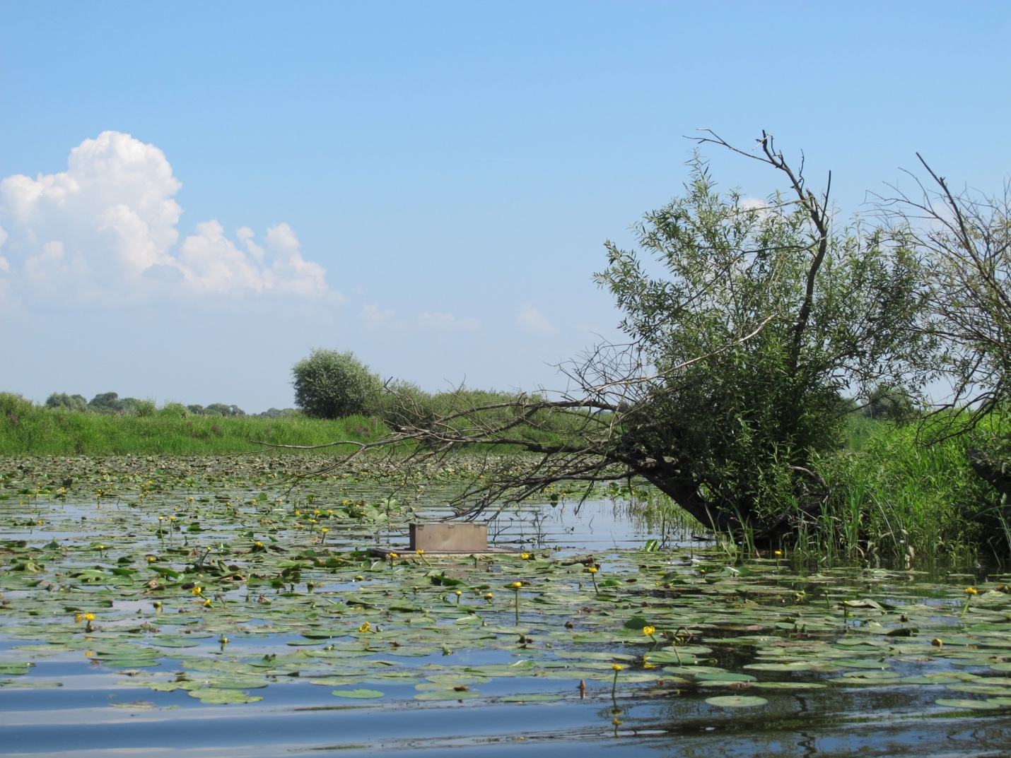 Terns are provided with floating island sanctuaries for their nests